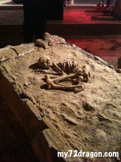 Coffin Exhibition 3